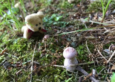 Ted E and the Small Mushroom